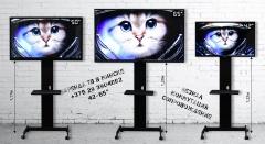 Прокат телевизора в Минске